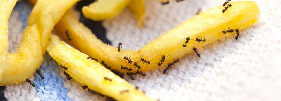 Pest Control Woodstock